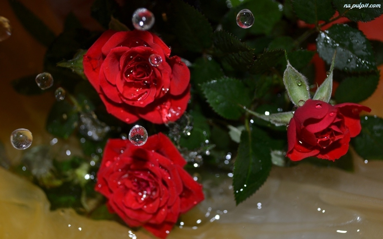 На аву розы